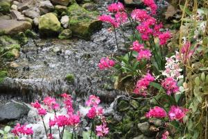 Orchideeën bij de waterval.