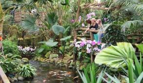Orchideeën wandeling door de tropen 023